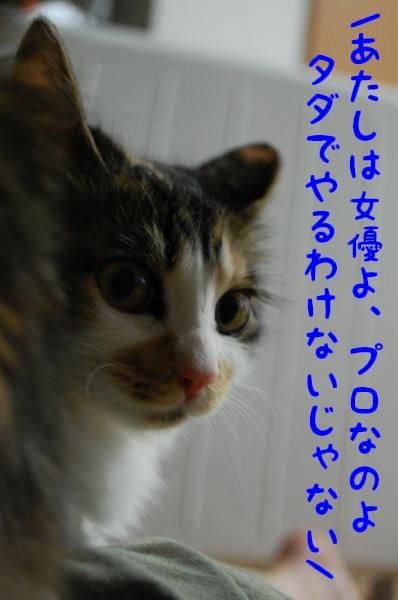 c0181639_1949305.jpg