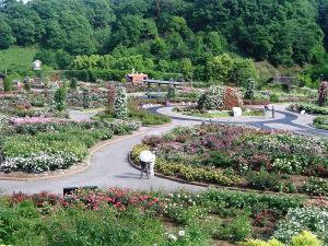 花フェスタ記念公園_b0107544_19314065.jpg
