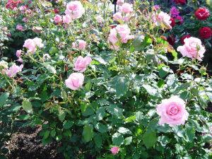 花フェスタ記念公園_b0107544_19322957.jpg