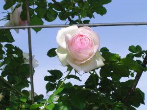 花フェスタ記念公園_b0107544_1935812.jpg