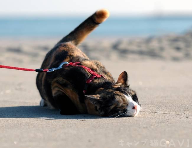潮風・・・陽だまり・・・猫日和_b0178444_053933.jpg