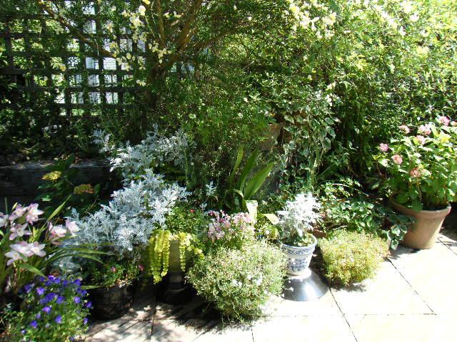 実家の庭_e0142956_1051035.jpg