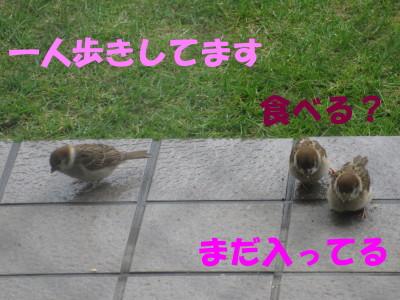 b0158061_2103755.jpg