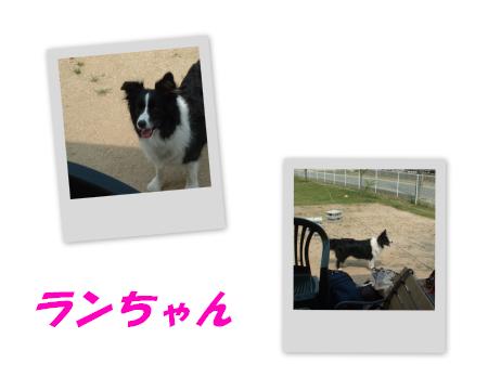 c0120585_2029749.jpg