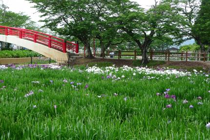 花菖蒲を見に・・_b0142989_2139220.jpg