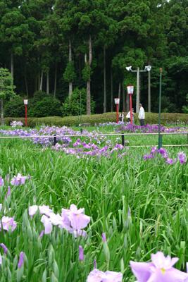 花菖蒲を見に・・_b0142989_21474468.jpg