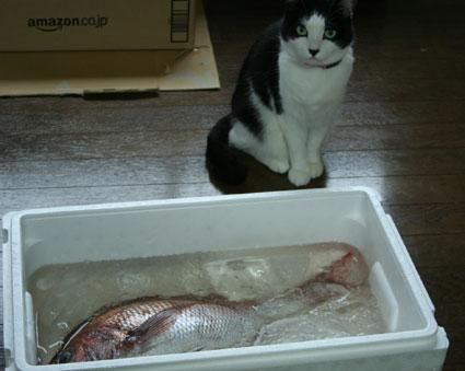 お魚くわえたどら猫〜??_d0071596_2220304.jpg