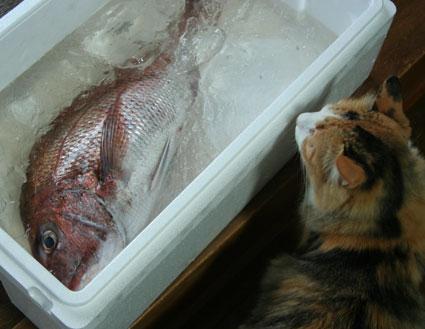 お魚くわえたどら猫〜??_d0071596_2221754.jpg