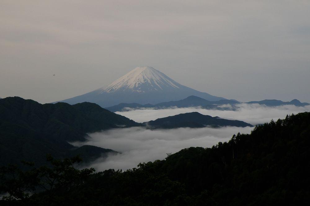 番外 コマドリ/雲海の富士_b0024798_5124854.jpg