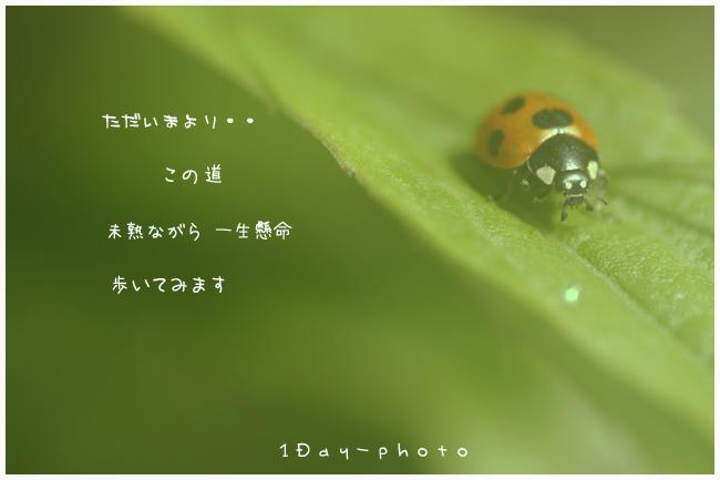 b0111005_13394443.jpg
