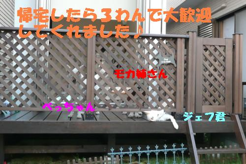 f0121712_235643.jpg