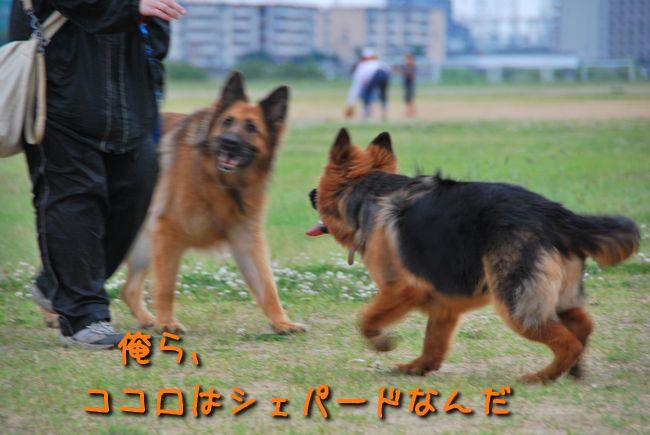 f0203612_0365581.jpg