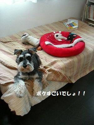 f0197317_1543553.jpg