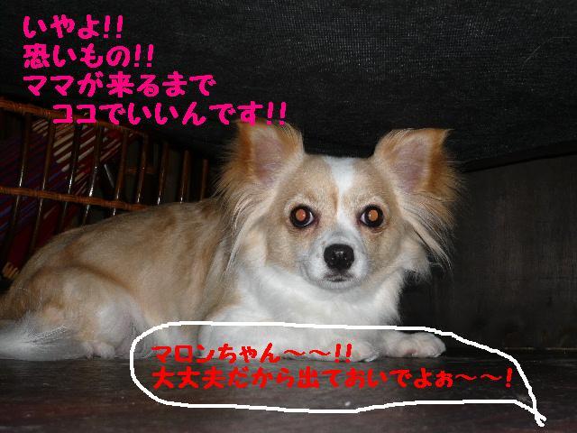 へっちゃら!&見事な伸び~!&恐いんだもん!!_b0130018_10455766.jpg