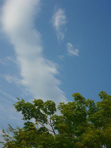 四日目  「無垢なる風景-別府から代官山へ」   ブログの世界。。。* *。:☆.。†_a0053662_1020563.jpg