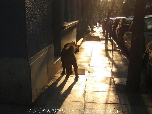 セルフ散歩していた夕方のチャウチャウ犬_f0037264_2032956.jpg