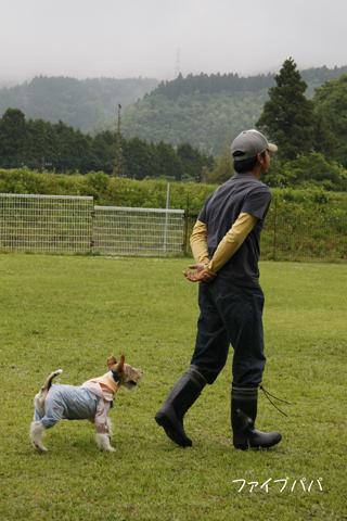 雨の足柄幼稚園体育祭_c0070377_23511538.jpg
