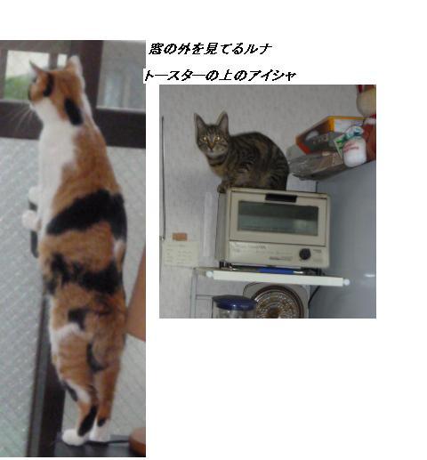 b0112380_21579.jpg