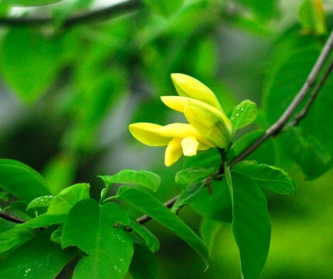 なんの 花 でしょう ?_f0205287_15353164.jpg