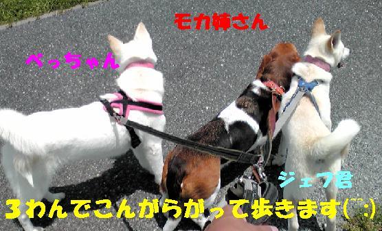 f0121712_0171976.jpg