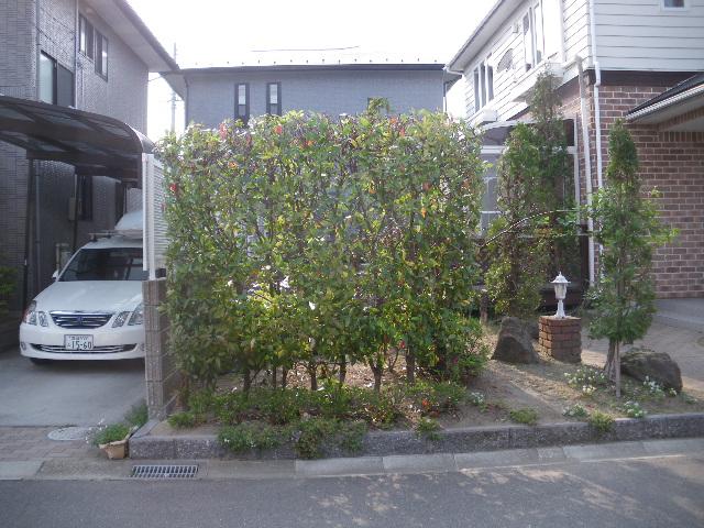庭樹剪定です_c0186441_2216069.jpg