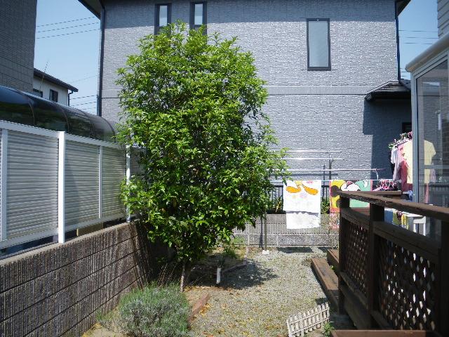庭樹剪定です_c0186441_22173289.jpg