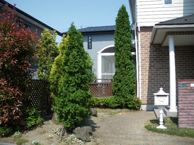 庭樹剪定です_c0186441_2218293.jpg