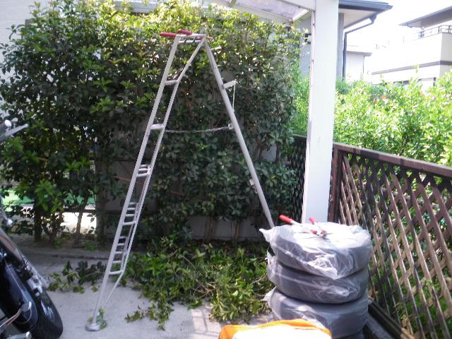 庭樹剪定です_c0186441_22254777.jpg