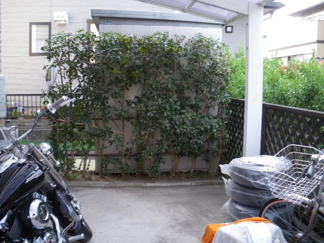 庭樹剪定です_c0186441_2226292.jpg