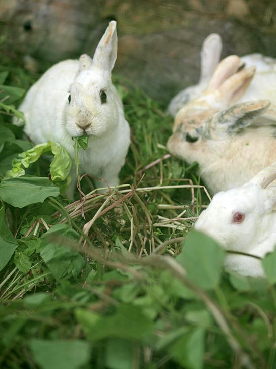 ウサギ家の食卓_a0100959_043611.jpg