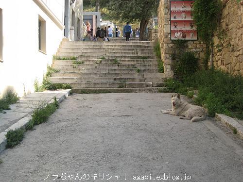 アクロポリスへ続く道にいたノラちゃん_f0037264_0392538.jpg