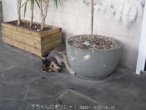 オモニア広場の片隅で昼寝するノラちゃん_f0037264_8144357.jpg