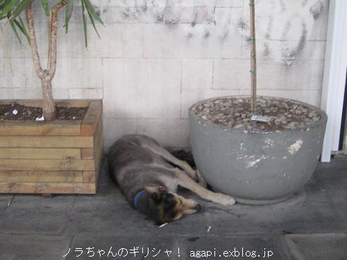オモニア広場の片隅で昼寝するノラちゃん_f0037264_8151012.jpg