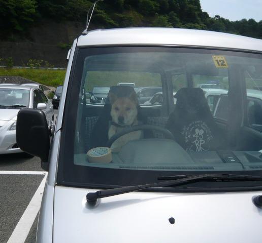 可愛い運転手_c0100865_6465578.jpg