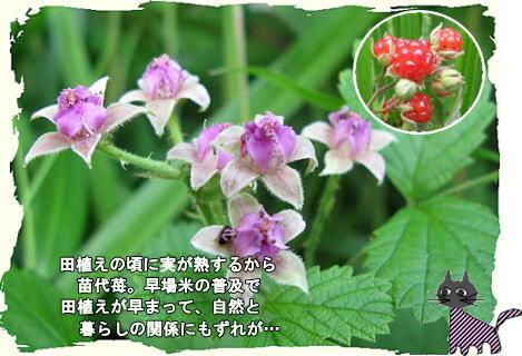 f0137096_22513973.jpg
