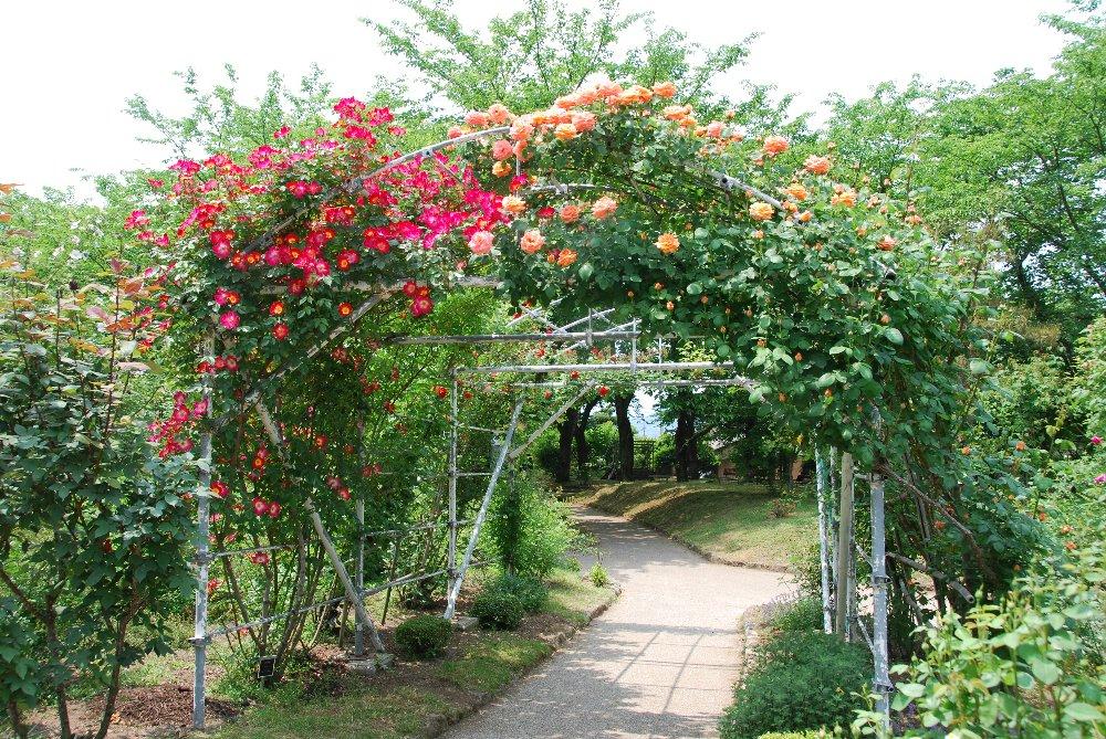 バラ園と温泉_e0087201_23294561.jpg