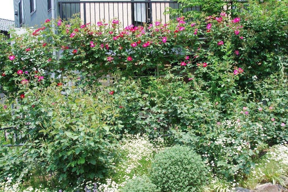 バラ園と温泉_e0087201_2330161.jpg