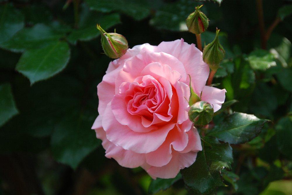 バラ園と温泉_e0087201_2330522.jpg