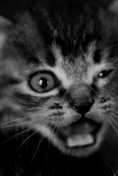子猫物語 #2_f0155808_9483089.jpg