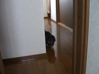 モモくんの忠犬_c0058727_1413328.jpg