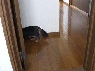 モモくんの忠犬_c0058727_14135970.jpg