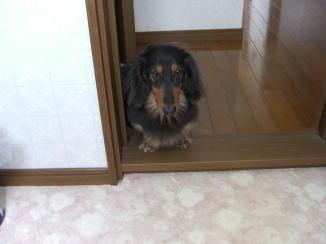 モモくんの忠犬_c0058727_14154721.jpg