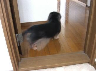 モモくんの忠犬_c0058727_14155917.jpg
