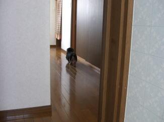 モモくんの忠犬_c0058727_14161232.jpg