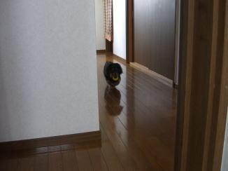 モモくんの忠犬_c0058727_14163654.jpg