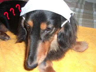 モモくんの忠犬_c0058727_1442325.jpg