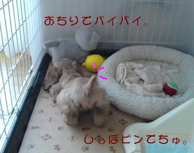 b0176428_14351960.jpg