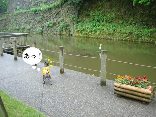 f0141130_1185898.jpg