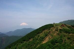 表丹沢と富士山 - ツツジは見られなかったけど・・・_c0171849_11562976.jpg