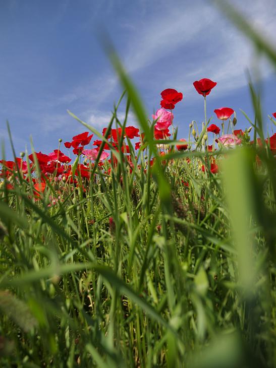 花畑から見上げて_a0100959_142319.jpg